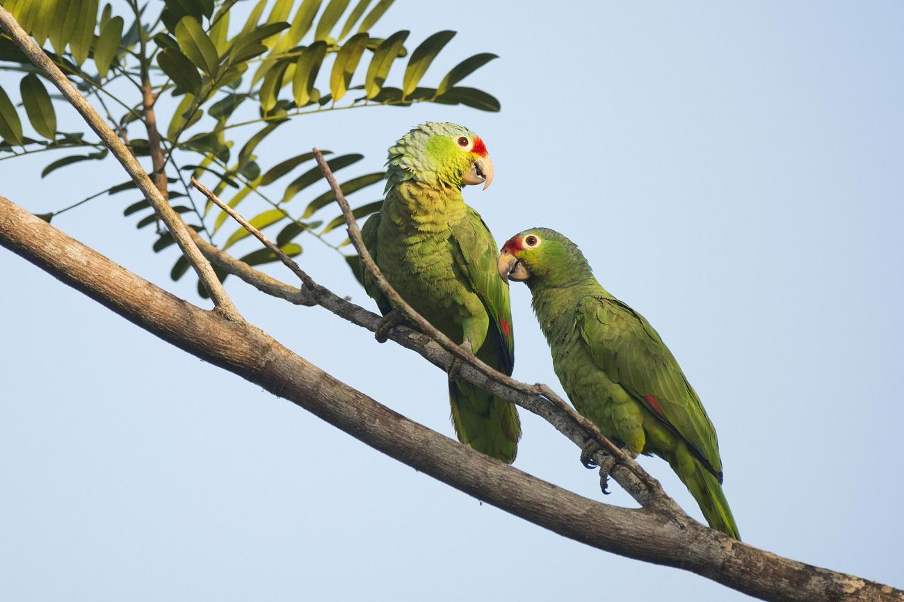 Ideia de papagaios no Uruguai se popularizou com filme (Foto: Erhard Nerger/Global Look Press)
