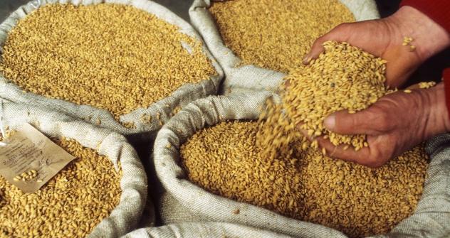 Les prix mondiaux des céréales ont augmenté de 40% et continuent de croître. Crédit photo: Itar-Tass