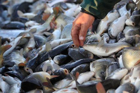 Les zones de pêche de l'Afrique occidentale sont principalement riche en sardines, chinchards, sardinelles et maquereaux. Crédit: Reuters/Vostock-Photo