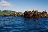 île Moneron
