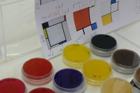L'artiste portugaise Marta de Menesis utilise des bactéries qui décolorent la solution colorée avec laquelle les tableaux sont peints. Source : service de presse