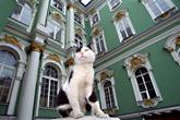 chats de l'ermitage