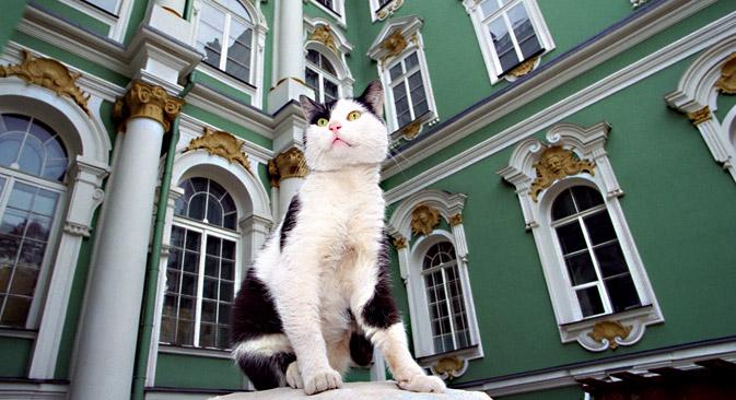 Les chats habitent dans le palais d'Hiver depuis l'époque de l'impératrice Élisabeth 1ère de Russie. Crédit : PhotoXPress
