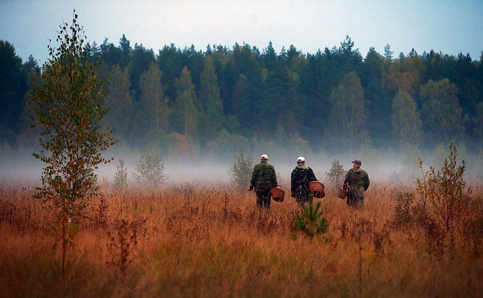 La cueillette des champignons dans une forêt.