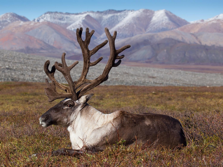 Bientôt, en plus de ses expéditions géologiques, Kirill commença à entreprendre de longs périples photos en Russie. C'est ainsi qu'il visita la Yakoutie du nord et du sud, les régions de Magadan et de Tchoukotka, la région de Vladivostok et du Kamchatka, la Carélie et la Péninsule de Kola, la région d'Irkoutsk et la Transbaïkalie, le Caucase du nord et la Crimée, le nord de l'Oural et le cercle polaire, le plateau de Poutorana et la Péninsule de Taïmyr.