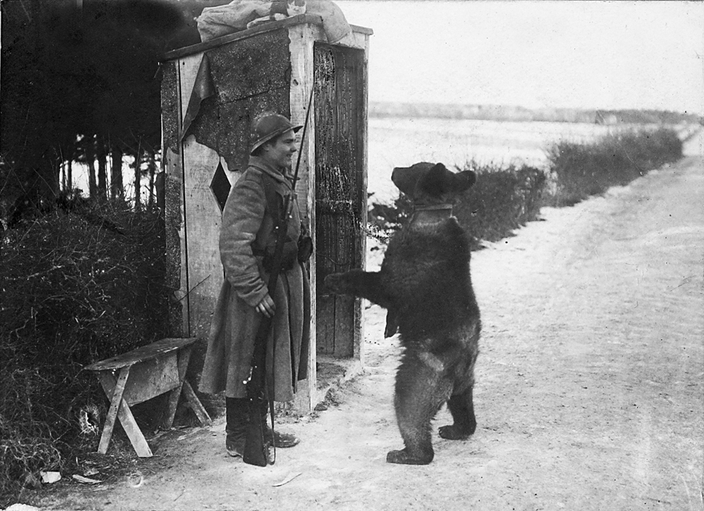 « Michka » la mascotte du 5e régiment. Venu petit de Russie, il a maintenant grandi et s'amuse devant une sentinelle. Il mourra au Jardin d'acclimatation en 1933.