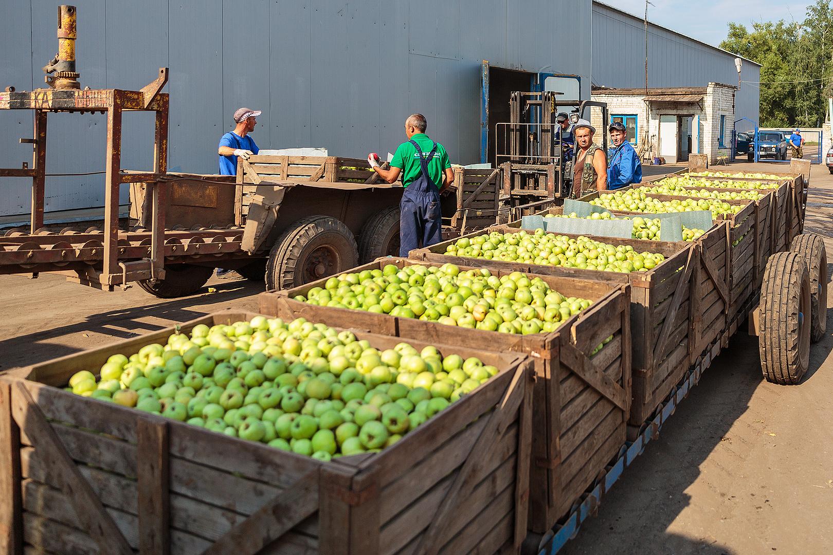 Spécialisée principalement dans la vente de pommes aux fabricants de jus et compotes, s'est tournée vers le marché du frais
