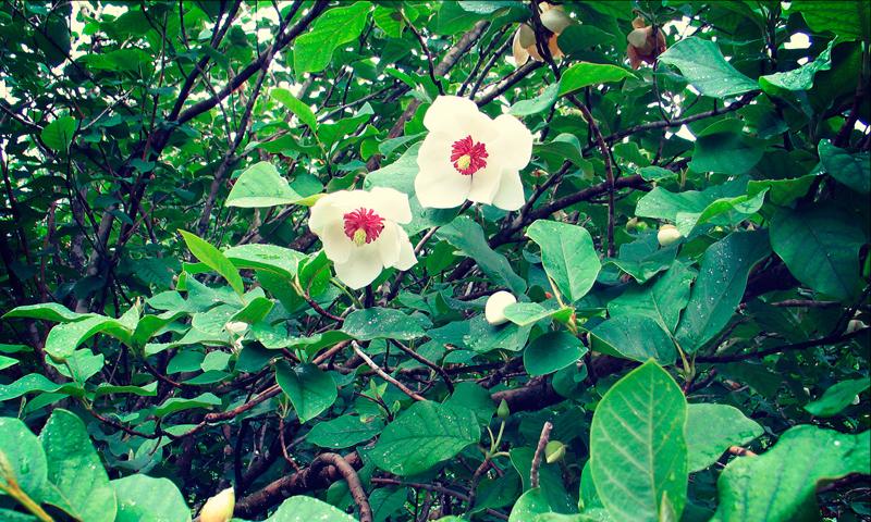 Crédit: Jardin botanique de Vladivostok