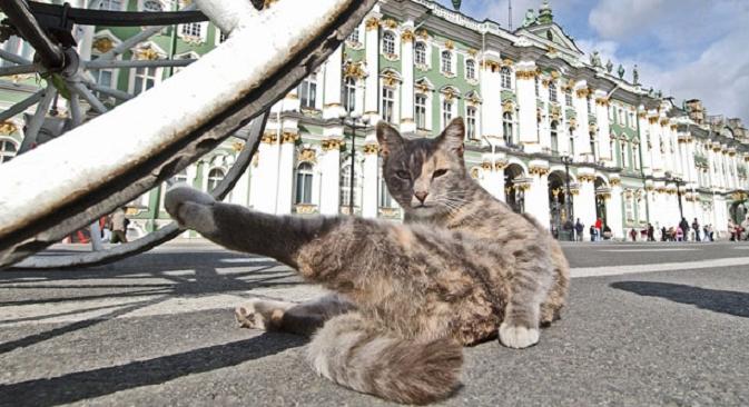 Dvorski trg u Sankt Peterburgu: čuvar i njegovo radno mjesto, muzej Ermitaž. Izvor: Komersant.
