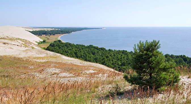 Kuršska prevlaka na obali Baltika: muzej prirodnih zona. Izvor: ITAR-TASS.
