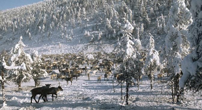 Bajkoviti zimski pejzaži i najhladnija točka sjeverne polutke. Izvor: RIA Novosti.