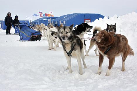"""Baza """"Barneo"""", koja se iznova organizira svake godine, predstavlja jedinstvenu znanstvenu, sportsku i turističku stanicu koja se nalazi u neposrednoj blizini Sjevernog pola. Izvor: Komersant."""