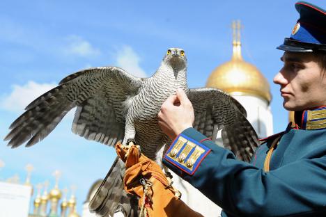 Kremaljski sokolar i njegova ptica čuvaju zlatne kupole Moskovskog kremlja (u pozadini) od vrana. Izvor: ITAR-TASS.