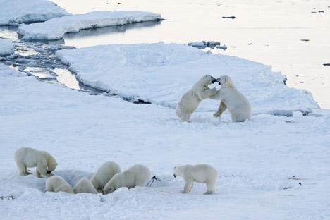 U čukotskom selu Rirkapij na snazi je policijski sat zbog opsade bijelih medvjeda. Izvor: M. Deminov / WWF