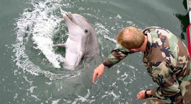 Danas u svijetu postoje samo dva centra za obuku borbenih delfina — to je baza u San Diegu (SAD) i Sevastopolj (Rusija). Fotografija iz slobodnih izvora