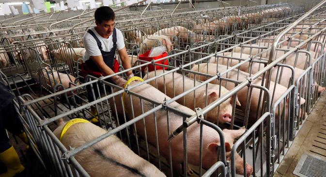 Mnoga ruska poljoprivredna poduzeća najavljuju spremnost da vlastitom proizvodnjom na tržištu nadomjeste robu na koju je uveden embargo. Izvor: Reuters.