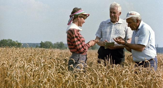 Bagrat Sanduhadze (s kapom) zajedno je s kolegama razvio 15 novih sorti ozime pšenice za zonu gdje je zemljište slabije kvalitete. Izvor: Vladimir Akimov/RIA Novosti.