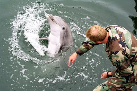 aat ini, hanya ada dua pusat pelatihan lumba-lumba tempur di dunia yakni yang berbasis di San Diego (Amerika Serikat) dan Sevastopol. Kredit: Avatar/wikimedia.org
