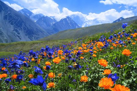 Pengunungan Altai, Siberia. Foto: Lori/Legion-Media.