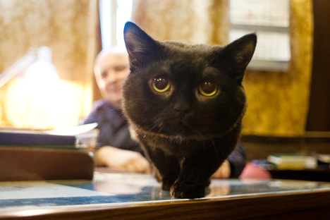 Kucing Botsman. Foto: Oleg Kuleshov