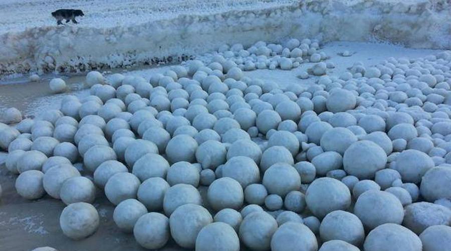 Ribuan bola salju tersebut bukanlah hasil karya para petarung bola salju, melainkan sebuah fenomena alam yang bisa terjadi saat salju dan es di tepi sungai terhantam ombak dan bergulung-gulung menjadi lingkaran yang bulat sempurna.