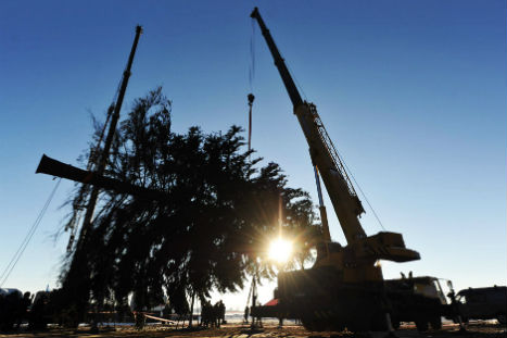 Workers prepare to load on trailer the Kremlin New Year Tree. Source: AFP/East News
