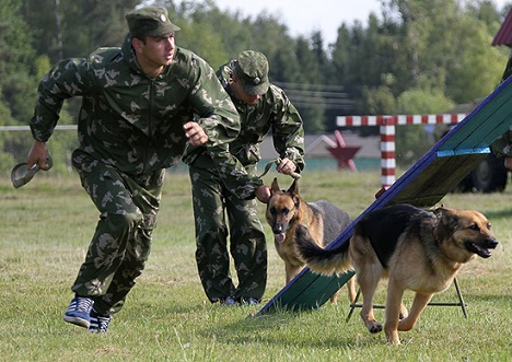Service dogs play a significant role in detecting landmines and explosive devices. Source: Ministry of Defence of the Russian Federation / mil.ru