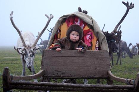 Wherever reindeer go, the herders follow / Lori, Legion Media