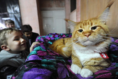 The cat, which did not have a pedigree, was valued at only 1,000 rubles ($30). Source: AFP / East News