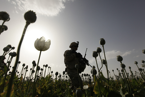 A soldier from the U.S. Army walks through a poppy field during an operation in the Arghandab River Valley in Kandahar Province. Source: Reuters