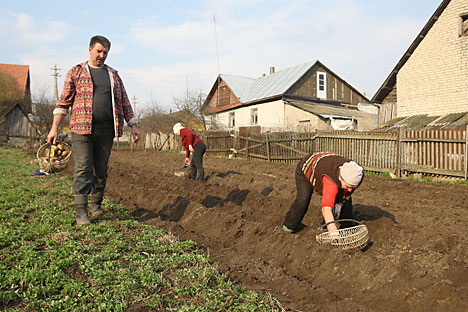 "The ""produce war"" between Russia and the West is encouraging an already growing trend towards growing your own food. Source: ITAR-TASS"