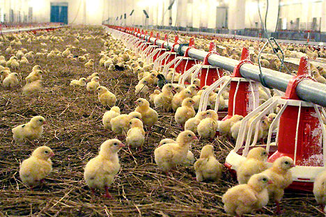 The Russian government introduced an embargo on agricultural products from the EU and the U.S. For American producers, the embargo first and foremost concerns chicken. Source: Photoshot / Vostok Photo