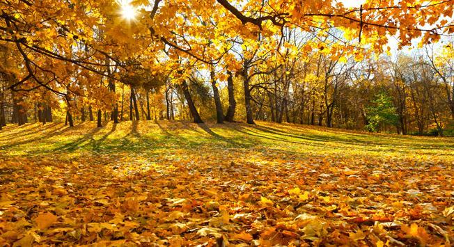 Gorky Park. Source: Lori/Legion-Media