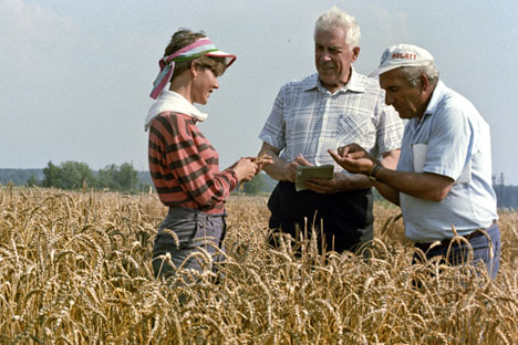 Today, Russia is one of the six leading producers of wheat. Source: RIA Novosti / Vladimir Akimov