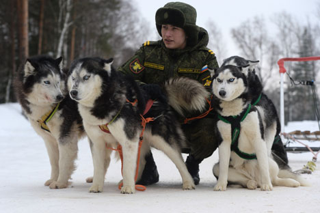 A cadet with Huskies during the military cynologists' training sessions at the Training Center for Service Dog Breeding. Source: Mikhail Voskresenskiy / RIA Novosti