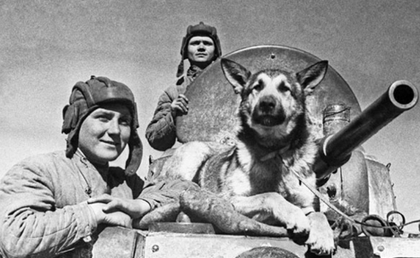Dogs rescued a total of more than 600,000 people from the battlefield. Source: TASS