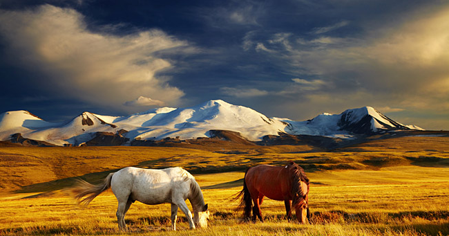 The Ukok Plateau is included in the UNESCO World Heritage List as part of the Golden Mountains of the Altai Natural Reserve. Source: Lori/Legion-Media