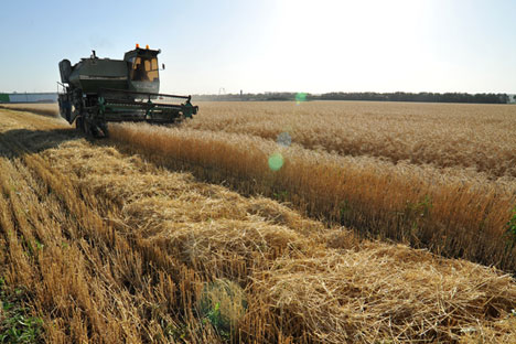 India could lease farmland in the Russian Far East. Source: Alexander Pogotov/RIA Novosti