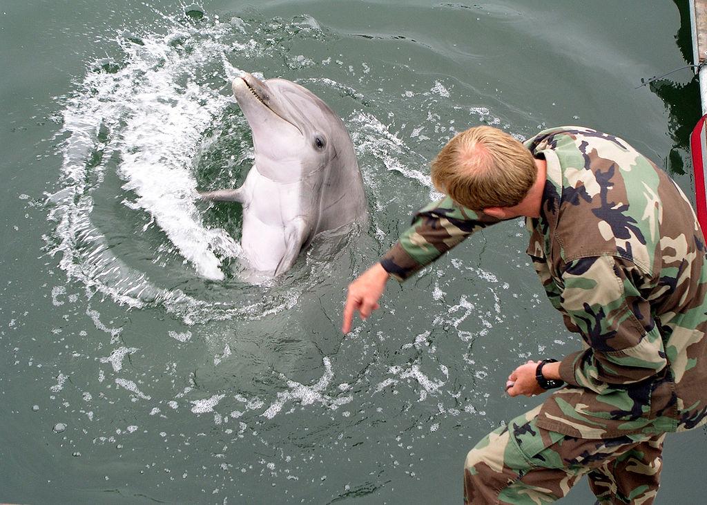 Treinamento de golfinhos para fins militares é prática na Rússia e nos EUA desde a Guerra Fria