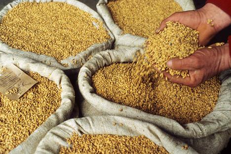 A causa delle cattive condizioni meteorologiche dell'estate 2012, l'esportazione di grano dalla Russia potrebbe essere significativamente ridotta, dicono gli esperti (Foto: Itar-Tass)