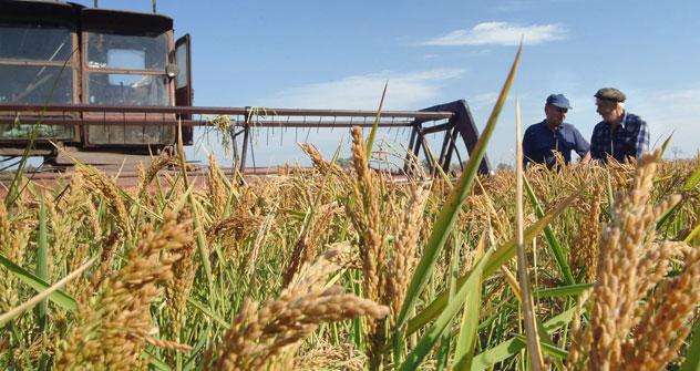 Secondo la Southern Rice Union, la Russia ha importato 81.900 tonnellate di riso nel periodo gennaio-agosto 2012, con un calo del 23,4 per cento anno su anno, mentre le esportazioni sono aumentate del 58,7 per cento nello stesso periodo, raggiungendo