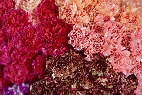 Quale migliore occasione di San Valentino per regalare fiori? (Foto: Elena Pochetova)