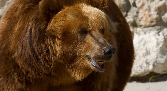 Ci sono alcune cose importanti da sapere nel caso si facesse un incontro ravvicinato con un orso russo (Foto: Lori/Legion Media)