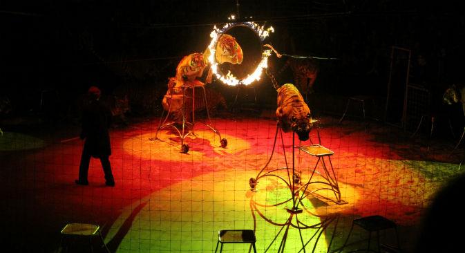 Il numero delle tigri è il più popolare del circo russo (Foto: Ufficio Stampa)