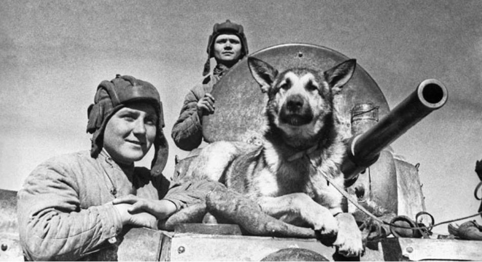 "Un cane ""soldato"" (Foto: Tass)"