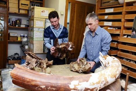 I resti appartengono a un titanosauro adulto vissuto dal Periodo Giurassico fino alla fine dell'Era Mesozoica (Foto: ufficio stampa)