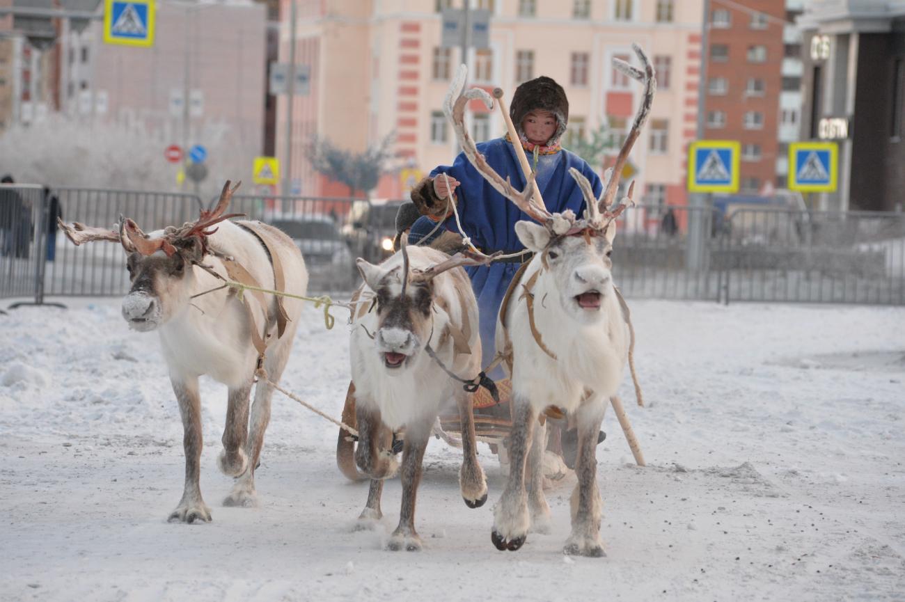 Slitta trainata dalle renne nel centro della città di Norilsk per la giornata conclusiva del festival Big Argish. Fonte: ufficio stampa