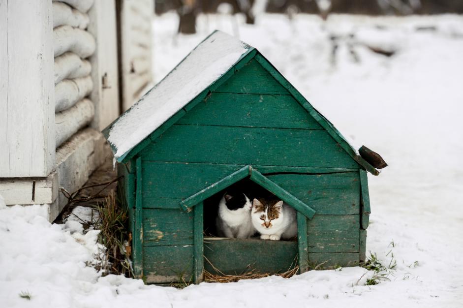 """Мачки во куќичка за кучиња во спомен-куќата на Лав Толстој во меморијалниот музеј """"Јасна Полјана"""" во Тулската област."""