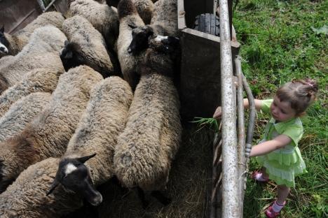 村上春樹によれば、まさにロマノフ種の羊が他の有名な種とともに日本の風土に順応させられ、とくべつ暖かい毛皮をもつこの動物の群れのなかにこの人気小説のヒロインである邪悪な羊が紛れこんだのである。=PhotoXPress撮影