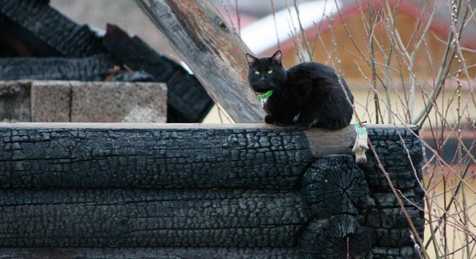 欧米諸国でも黒猫は不吉な動物とされる=アントン・デニソフ撮影 / ロシア通信